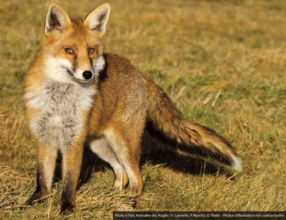 Photos © Parc Animalier des Angles / F. Launette, P. Nosetto, D. Watts   Photos d'illustration non contractuelles